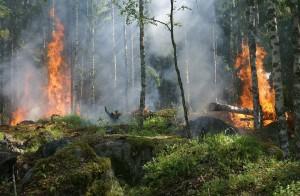 За прошедшую неделю площадь лесных пожаров сократилась с 3 млн га до 2,4 млн га.