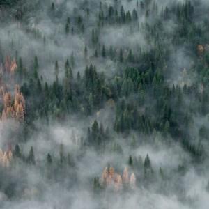 Авиация Минобороны за сутки погасила более 150 тысяч гектаров горящей тайги