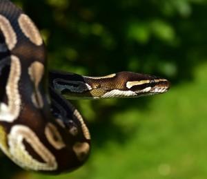 Школьница сфотографировалась у дерева и чуть не стала жертвой нападения опасной змеи.