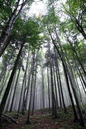По данным Авиалесоохраны, тушение лесных пожаров в Сибири продолжается на площади 273 тысячи гектаров.