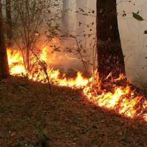 На 6% снизилась площадь лесных пожаров в России за сутки
