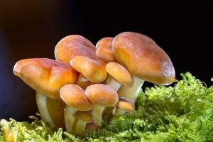 Социологи рассказали о любимых грибах россиян