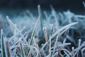В Самарской области снова ожидают заморозки