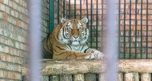 Сегодня состоится онлайн-трансляция экскурсии в Самарский зоопарк