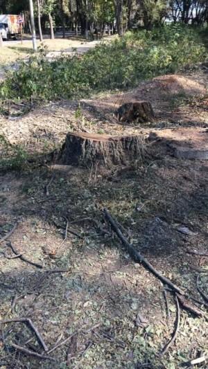В Промышленном районе вырубили целую аллею деревьев