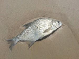 Росрыболовство обвинило Жигулевскую ГЭС в гибели рыбы