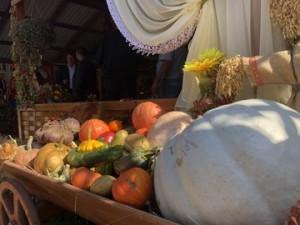 В Усть-Кинельском открылась XXI Поволжская агропромышленная выставка.