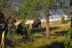 Минприроды оценило стоимость всех российских зверей, лесов и воды России