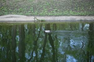 Самарцы просят установить ограждения у канала в парке Гагарина