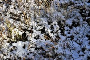 В Самарской области в начале недели обещают мокрый снег