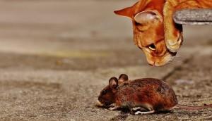 Используемая приманка безопасна для людей и домашних животных.