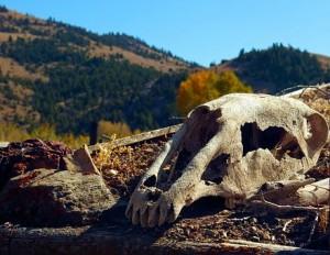 В департаменте ветеринарии Самарской области не видят проблем с утилизацией биоотходов