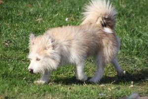 В Самаре опять некому отлавливать бездомных собак