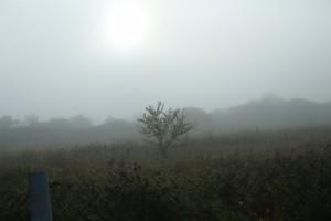 В Самарской области ожидают густой туман