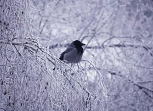 Жителей Самарской области ждет мороз до -15 градусов