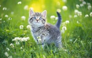 Суд признал, что обвинения в мошенничестве НКО «Благотворительный фонд помощи животным «Доброе Сердце Мира», размещенные в соцсетях, не соответствуют действительности.