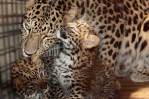 Самарский зоопарк приглашает отметить День матери