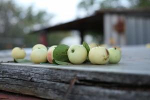 Роскачество не нашло в России опасного яблочного пюре