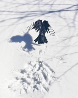 В первом зимнем месяце самарцев ждет мало осадков