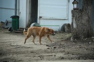 Вместо недобросовестного подрядчика в Тольятти бродячих собак ловят волонтеры