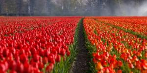 Название Голландия официально перестало существовать