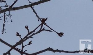 В тольяттинском лесу набухли почки на деревьях