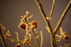 В Самарский регион идет похолодание