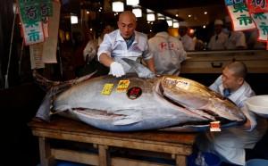 Голубой тунец весом 278 кг был продан за $1,8 млн местной ресторанной сети.