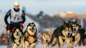 Гонки на собачьих упряжках в Тольятти станут частью мирового заезда