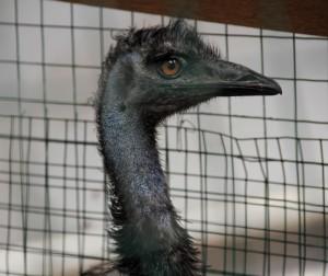 Прогулка со страусом обернулась крупным штрафом