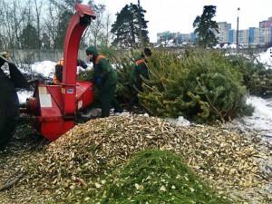 Региональный оператор выступил с инициативной дать елкам вторую жизнь.