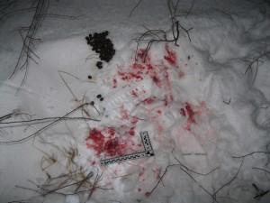 Житель Самарской области незаконно застрелил лося