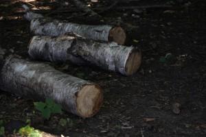 В Минприроды придумали, как бороться с черными лесорубами