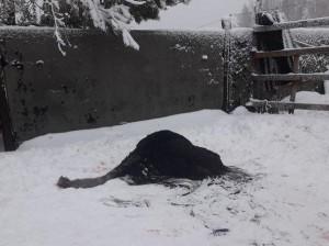 Очевидцы утверждают, что дикие собаки растерзали страусов и оленя из мини-зоопарка под Тольятти