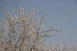 В Роспотребнадзоре предупредили россиян о зимних клещах Они проснулись из-за аномально-теплой погоды.
