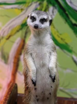 В Самарской области закрывают все контактные зоопарки