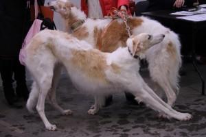Межрегиональная выставка товаров и услуг для домашних животных «Уши Лапы Хвост» снова пройдет в Самаре
