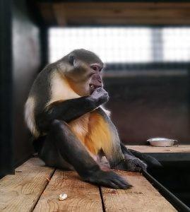 Зовут нового обитателя зоопарка Рома, ему 9 лет, он в самом расцвете сил.