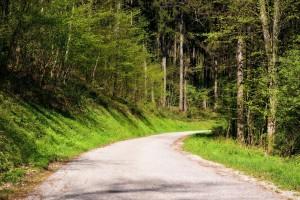 Реконструировать «лесную дорогу» в Тольятти мешает отсутствие земли.