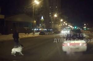 В Самаре сбитый пешеход и его собака от удара отлетели на 9 метров