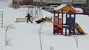 В Тольятти стая бездомных собак бросилась на ребенка Инцидент произошел возле школы.