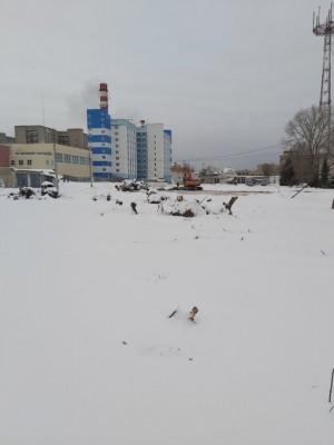 Особо охраняемый пруд Сухой на территории самарского пединститута начали застраивать без разрешения