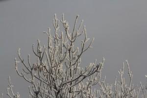 В Самарской области из-за снега объявлен жёлтый уровень опасности Ожидается метель, видимость будет слабой.