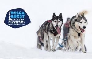 Международная гонка на собачьих упряжках Волга Квест в Самарской области начнется уже в эту субботу