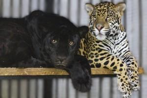 Самарцев приглашают на День всех влюбленных в зоопарк
