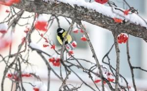 Весеннее тепло придет в Центральную Россию на текущей неделе. Однако, по мнению синоптика, похолодание вернется уже в марте.