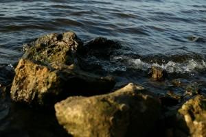 В Волжском районе обеспечили свободный доступ к береговой полосе и водоохраной зоне