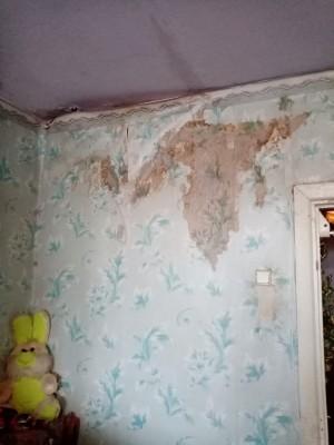 Плесень съела квартиру многодетной семьи в Самарской области
