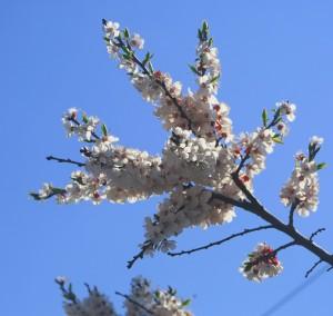 Самарскую область ждет малиновое лето
