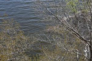 В Самаре почистят реку, чтобы она не затопила Южный город